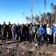 ЭКОС и Green Teame пришли на помощь Гродненскому лесхозу